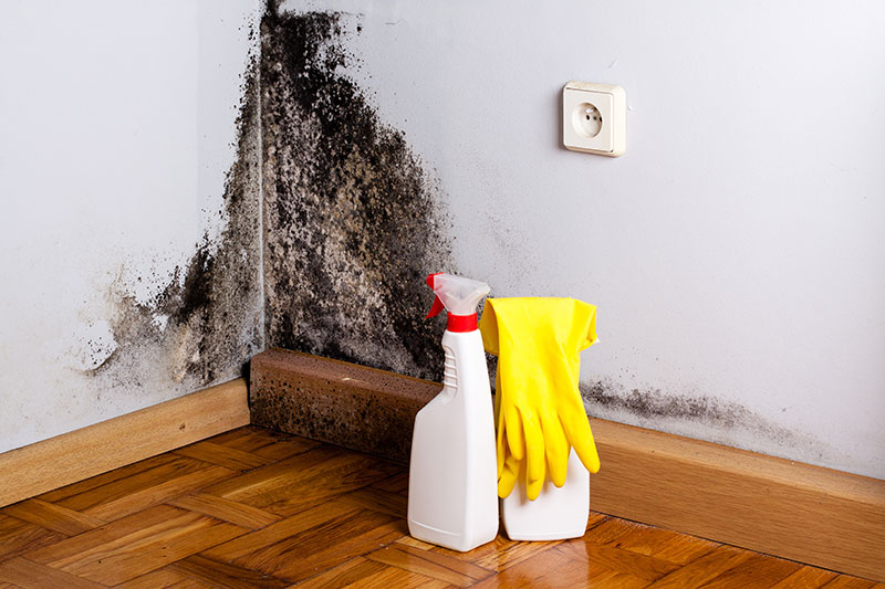 Mold In Bathroom Landlord Responsibility who is responsible for mould in a strata property?